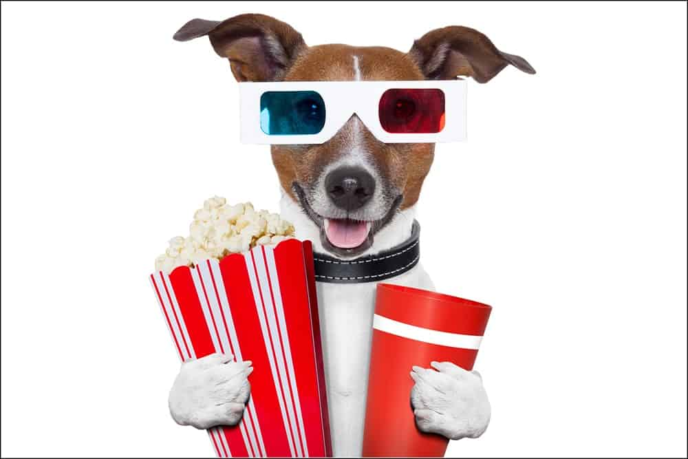 Can You Use 3d Glasses from the Movie Theater at Home